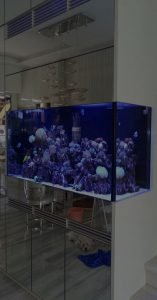 Design and Build Marine Aquarium Background